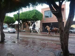 馬で歩く人の写真・画像素材[4868616]