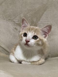 香箱座りの猫の写真・画像素材[4866727]