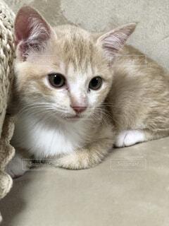 仔猫の写真・画像素材[4866728]