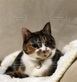 お昼寝マットでくつろぐ猫の写真・画像素材[4867581]
