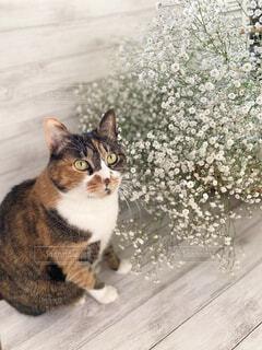 猫とかすみ草の 花束の写真・画像素材[4868023]