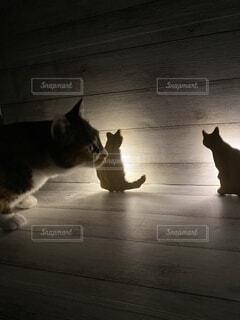 猫型ライトと猫の写真・画像素材[4869739]