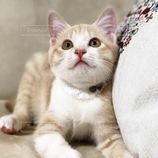 見上げる仔猫の写真・画像素材[4869777]