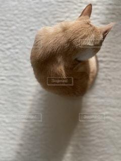 猫の頭の写真・画像素材[4870019]
