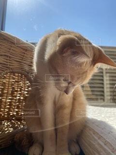 青空と座って居る猫の写真・画像素材[4870021]