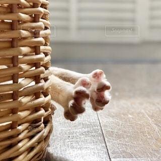 猫ちぐらから出た猫の足の写真・画像素材[4876827]