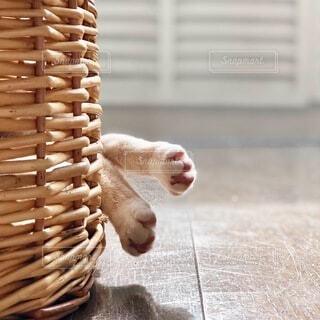 猫ちぐらの中でお昼寝中の猫の足の写真・画像素材[4876828]
