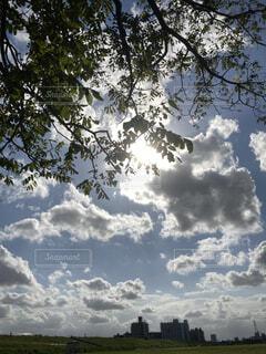 空の木の写真・画像素材[4866851]