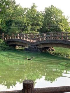 緑の水面とカモの写真・画像素材[4871439]