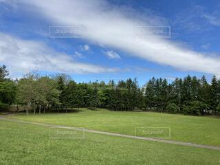 緑と空の自然なコントラストの写真・画像素材[4872229]