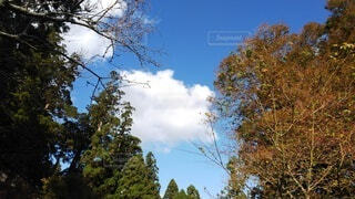紅葉の空の写真・画像素材[4869193]