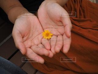 花と手の写真・画像素材[4867787]