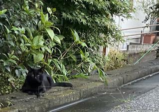 つややかな黒い猫の写真・画像素材[4875304]