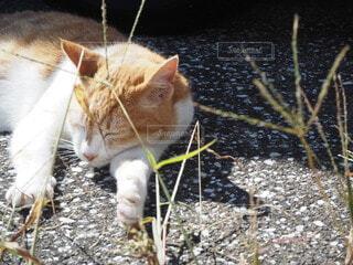 猫だって腕を枕にするもんっの写真・画像素材[4945314]