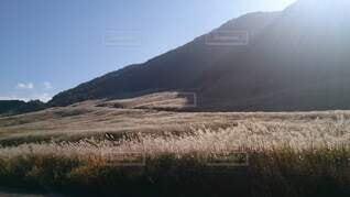仙石原すすき草原の写真・画像素材[4867749]