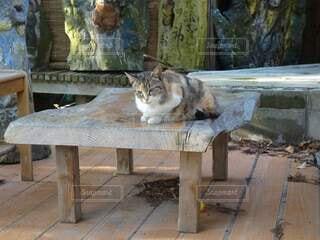 ベンチに座ってる猫ちゃんの写真・画像素材[4867782]