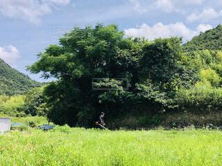 草刈り風景の写真・画像素材[4873721]