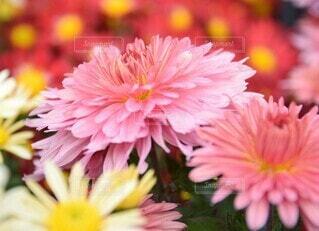 花のアップの写真・画像素材[4871336]