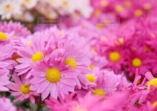 雨上がりの花の写真・画像素材[4871344]