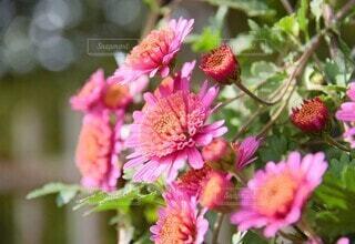 花のクローズアップの写真・画像素材[4871346]