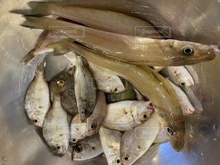 魚のクローズアップの写真・画像素材[4885877]