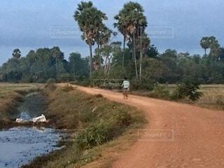 川沿いの道を自転車で通る男性の写真・画像素材[4876444]