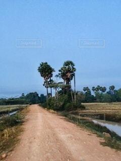 カンボジアの田舎道の写真・画像素材[4895259]