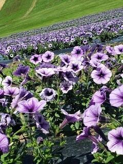 紫の花の写真・画像素材[4868889]