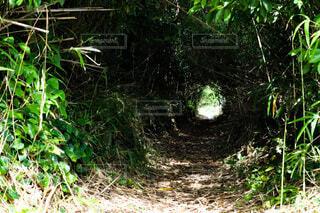 緑のトンネルの写真・画像素材[4869265]