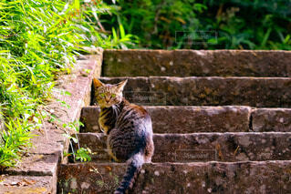 見返り猫さんの写真・画像素材[4905281]