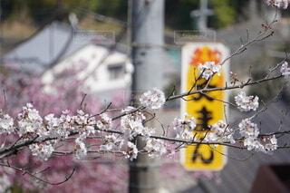 木の枝に花瓶の写真・画像素材[4869338]