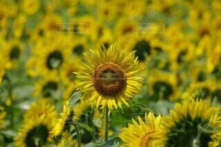 花のクローズアップの写真・画像素材[4876507]