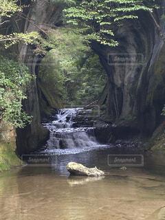緑と水の流れの写真・画像素材[4869878]