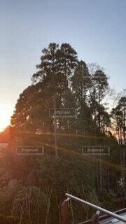 森のあさひの写真・画像素材[4870239]