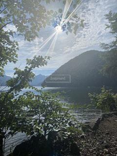 水の体の隣にある木の写真・画像素材[4876111]