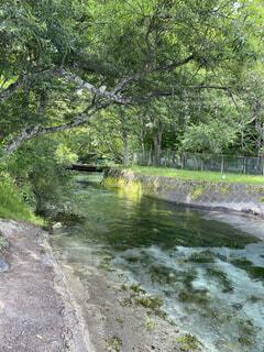 水の中を流れる川の写真・画像素材[4876120]