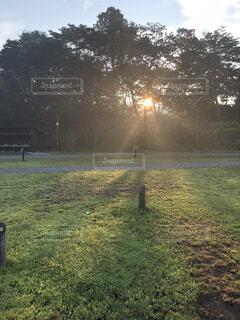背景に木々のある大きな緑の畑の写真・画像素材[4876122]