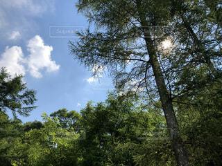 森の中の大きな木の写真・画像素材[4876124]