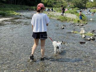 犬との川遊びの写真・画像素材[4875165]