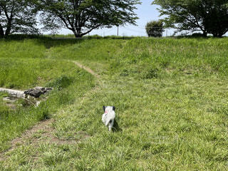 草原を堪能するパピヨンの写真・画像素材[4875201]
