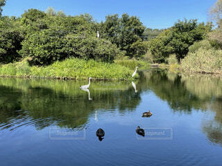金山調整池の写真・画像素材[4886243]