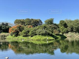 金山調整池の写真・画像素材[4886241]