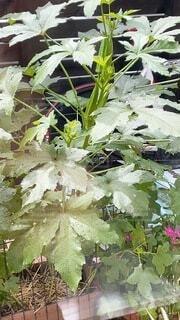 庭の植物の写真・画像素材[4872338]