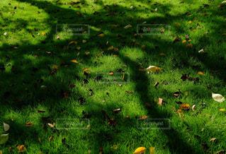 公園の写真・画像素材[476676]