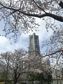 桜み魔見れるランドマークタワーの写真・画像素材[4875265]