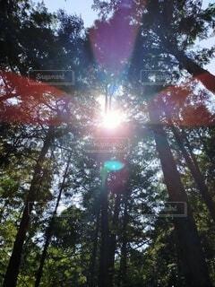 木の前の止まる光の写真・画像素材[4870699]