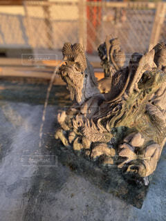 爬虫類の滝の写真・画像素材[4870865]
