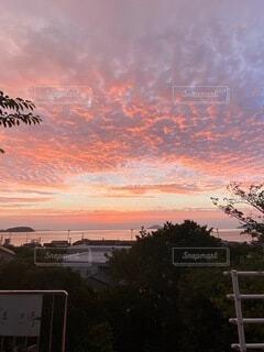 夕日の前の木の写真・画像素材[4873182]