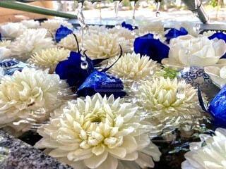 花の表情の写真・画像素材[4873199]