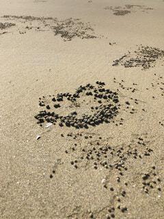 砂の玉の写真・画像素材[4888049]